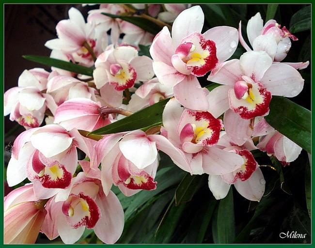 Красивая открытка с орхидеями
