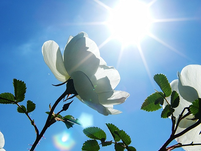 картинки цветы с надписью поздравляем